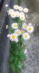 写真ふんわり_20210512_125915.jpg